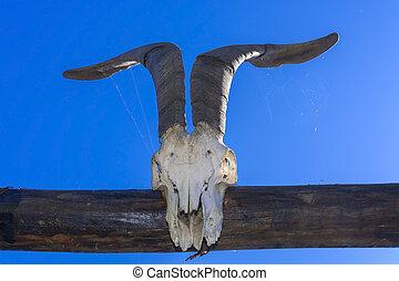 Goat Skull  - Goat skull on the gate in a farmyard, Hungary