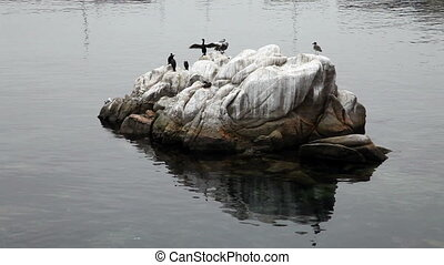 Black Cormorants And Pelican Stand - Cormorants And Pelican...