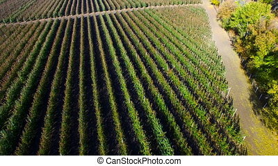 Flying Over Orchard Aerial Survey - Flying Over Orchard in...