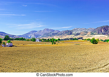 Plowed Fields - Olive Groves and Plowed Sloping Hills of...
