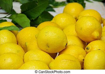 citrous 08
