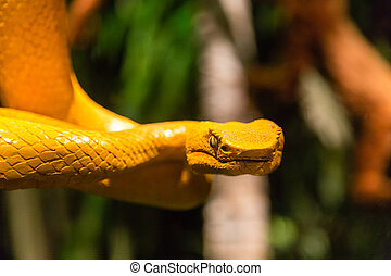Venomous Yellow Viper coiled to strike
