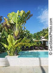 tropicais, recurso, piscina, jardim, em, kep, cambodia,