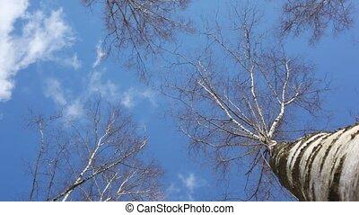 Treetop in blue sky