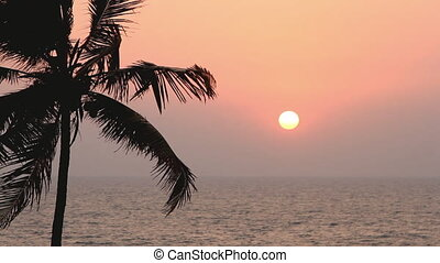 Palm Trees Silhouette At Sunset - Palm Trees Silhouette At...