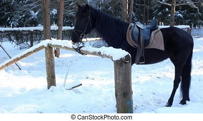 Horse stand