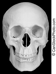 Human skull isolated on black background - The human skull...
