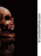 Scary Skull - Dark Scary Skull Smiling In Darkness Isolated...