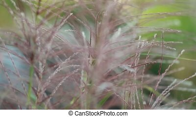 beautiful fluffy grass on the blurred background