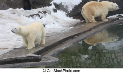 white bear in zoo - White bear in zoo