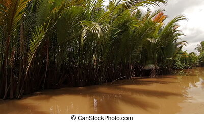 Tropical forest river boat trip on Mekong Delta canal...