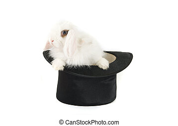 bunny and black hat - White bunny at black hat isolated on a...