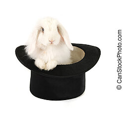 rabbit and black hat - White rabbit at black hat isolated on...