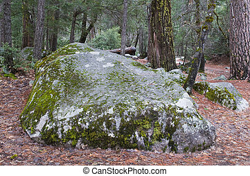 Boulder - Moss-covered boulder, Mirror Lake, Yosemite...