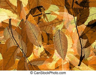 Carpet of leaves. Great background of autumn leaves, all...