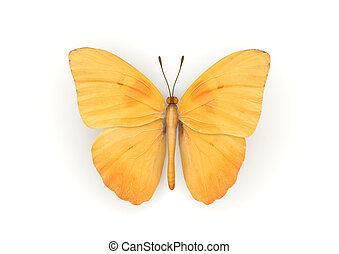 Orange Butterfly Isolated
