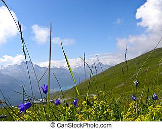 montagne, fiori