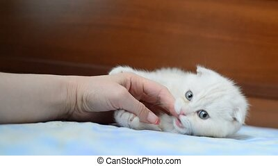 kitten biting a woman hand - The kitten biting a woman hand