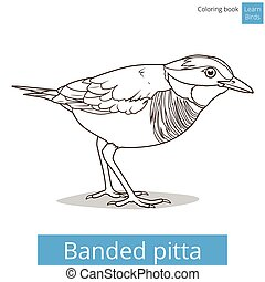 Banded pitta bird learn birds coloring book vector - Banded...