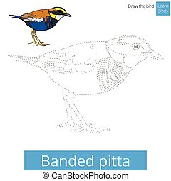 Banded pitta bird learn to draw vector - Banded pitta learn...