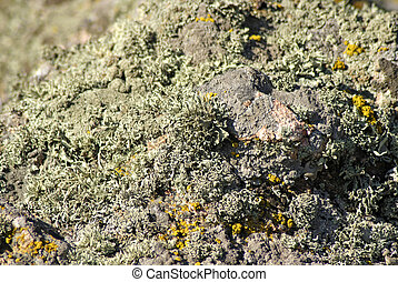 Moss and lichen on a stone