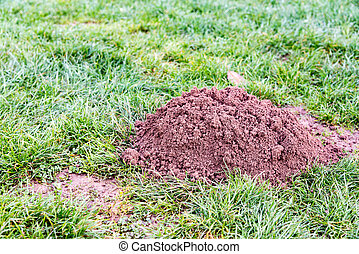 Molehill in a garden - Molehill in a french garden