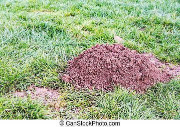 Molehill in a garden - Molehill in a french garden