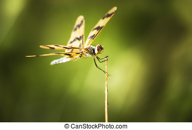 Dragonfly clutching fern blade - A Dragonfly Clings Tightly...