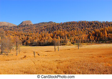 Scenery autumnal mountain landscape, Alpe Devero Natural...