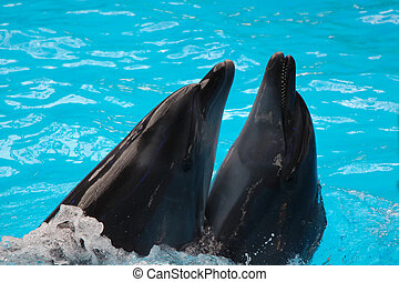 a couple of dolphins - a couple of gray dolphins in blue...