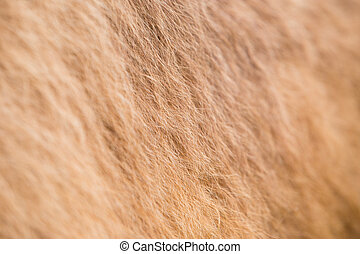 Camel fur texture od pattern or background with some blurred