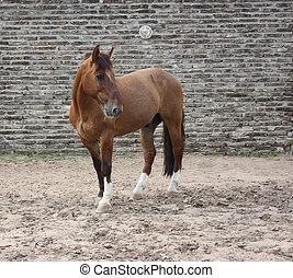 Sorrel Horse against brick wall, looking at one side