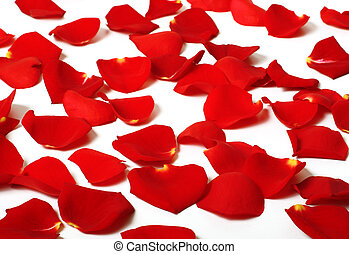 Rose petals - Romantic rose petals scattered around