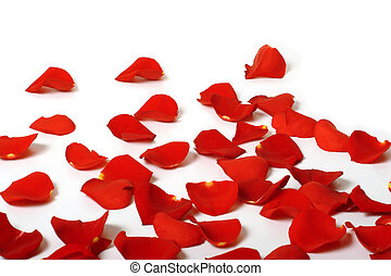 Rose petals - Romantic red rose petals on white with copy...