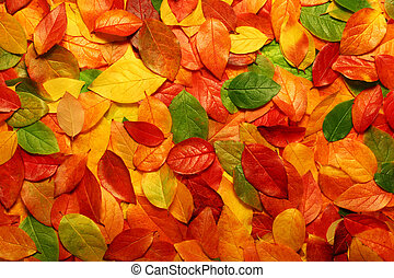 Autumn leaves background - Colorful backround image of...
