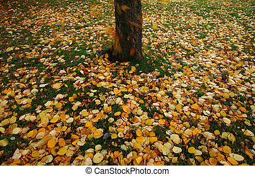Autumn leaves falling to the ground - Seasonal image of...
