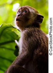 Monkey Awe