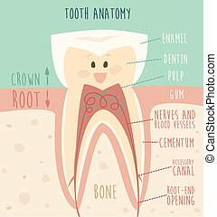 tooth anatomy funny tooth concept of healthy teeth vector...