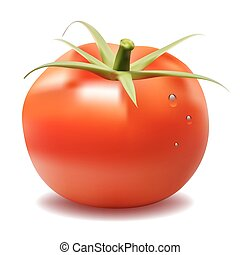 red big fresh tomato isolated
