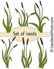 Reeds - Set of Reeds