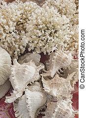 branca, Coral, e, Seashells, lembranças, em, market, ,