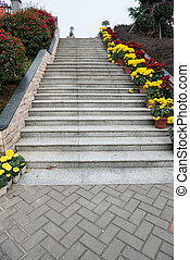 stairs with lots of chrysanthemum on side