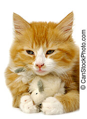 Kitten with mouse - A sweet kitten is holding a toy mouse.