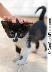 Child hand caressing little kitten.