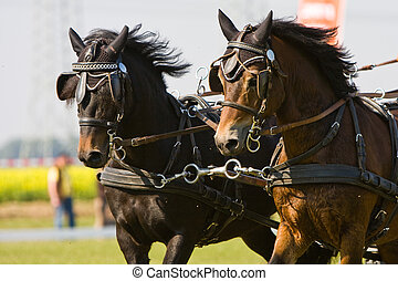 horse-drawn carriage - horse carriage