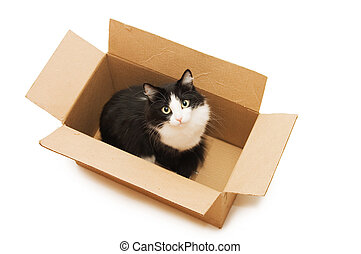 A lovely black cat in the cardboard box