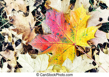 Autumn background with colorful leaf. Seasonal nature