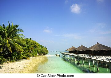 beach scene  - Picture of beach scene at maldives