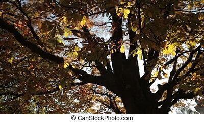 Trees in the wind, autumn season.