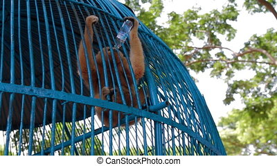 Monkey drink water in cage Zoo Vietnam